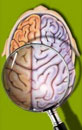 About Brain Mapping?